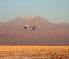 Salar de Atacama, Chile