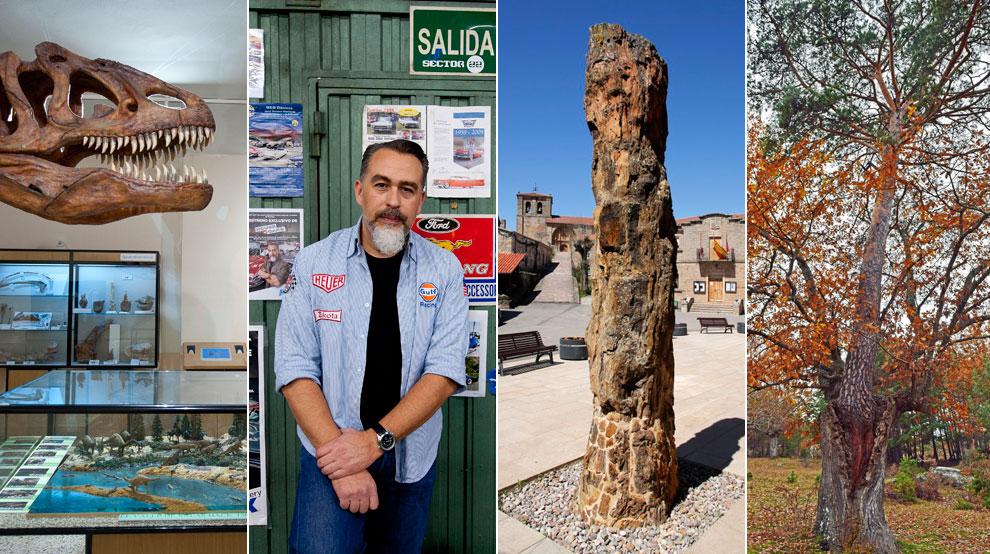 De izquierda a derecha: Museo de Dinosaurios (Salas de los Infantes), Taller M&M Clásicos (Quintanar), Árbol fósil (Hacinas) y Pino-roble (Canicosa de la Sierra).