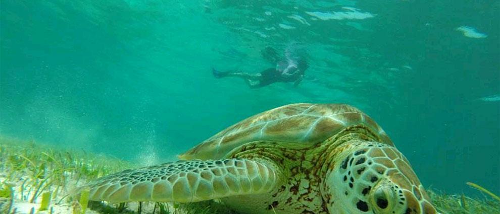 El buceo en Cayo Caulker es uno de los mayores atractivos de la isla de Belice. | Fotos: Belize Tourism Board