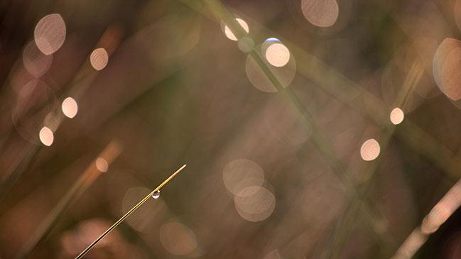 Foto realizada con una Canon EOS 5D Mark II en modo Manual, sin flash, velocidad de obturador 1/200 seg, apertura f5,6, distancia focal 105 mm y 800 ISO.