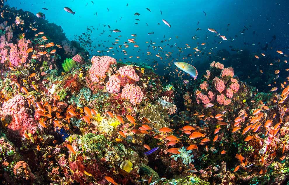 La región de las Bisayas es uno de los mejores lugares para apreciar la biodiversidad del llamado Amazonas de los mares filipinos.