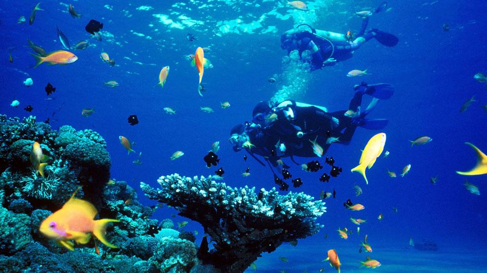 Practicar submarinismo en las aguas del mar Rojo permite descubrir decenas de especies diferentes.