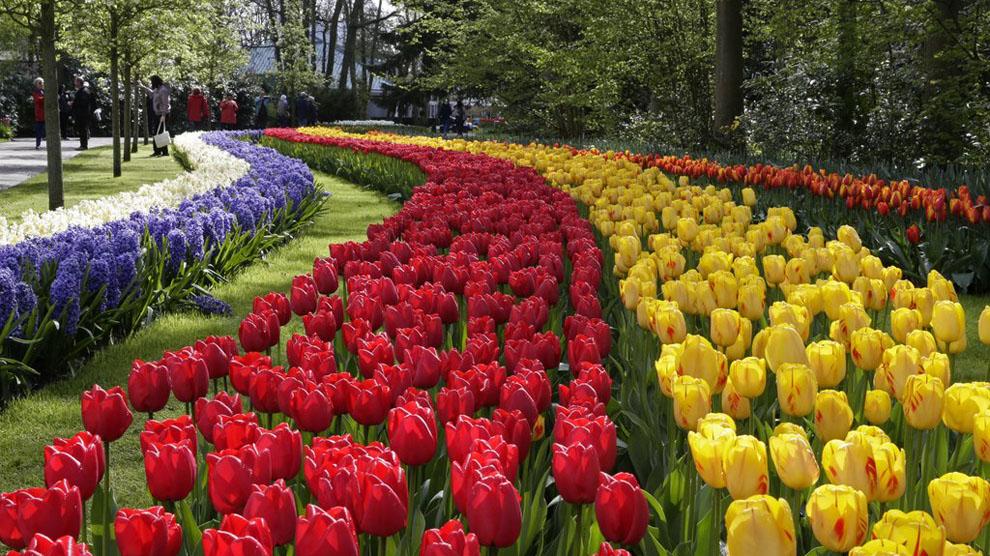 Keukenhof un jard n con siete millones de tulipanes europa ocholeguas - Jardines de tulipanes en holanda ...