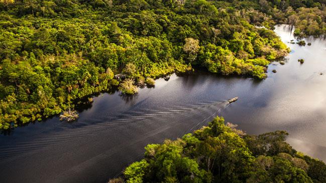 Paisaje repleto de los m�ticos nen�fares que salpican el r�o Amazonas.