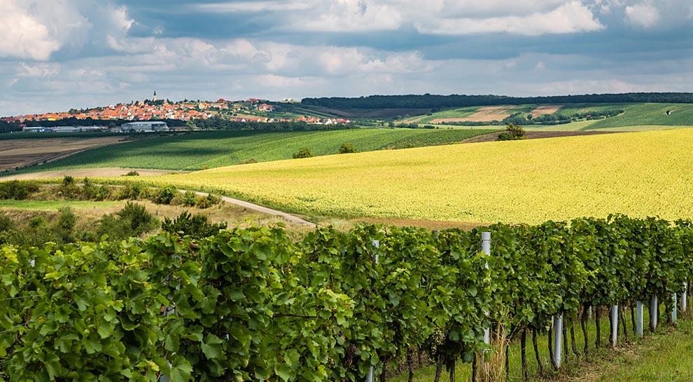 Los viñedos que rodean a Kraví Hora, la única República del Vino existente en el mundo. | Foto: Shutterstock